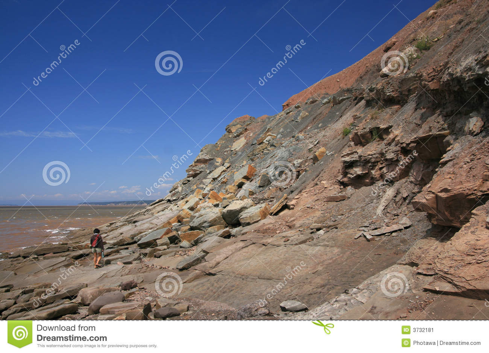 joggins fossil cliffs nova scotia stock image