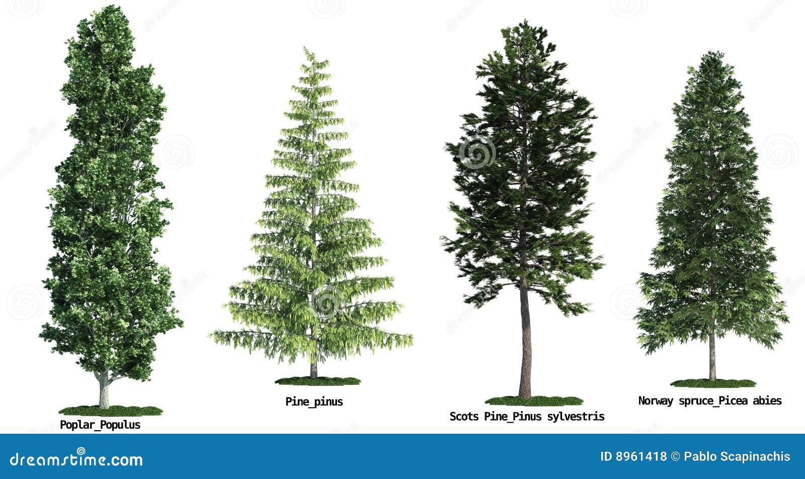 Jogo de quatro árvores isoladas de encontro ao branco puro
