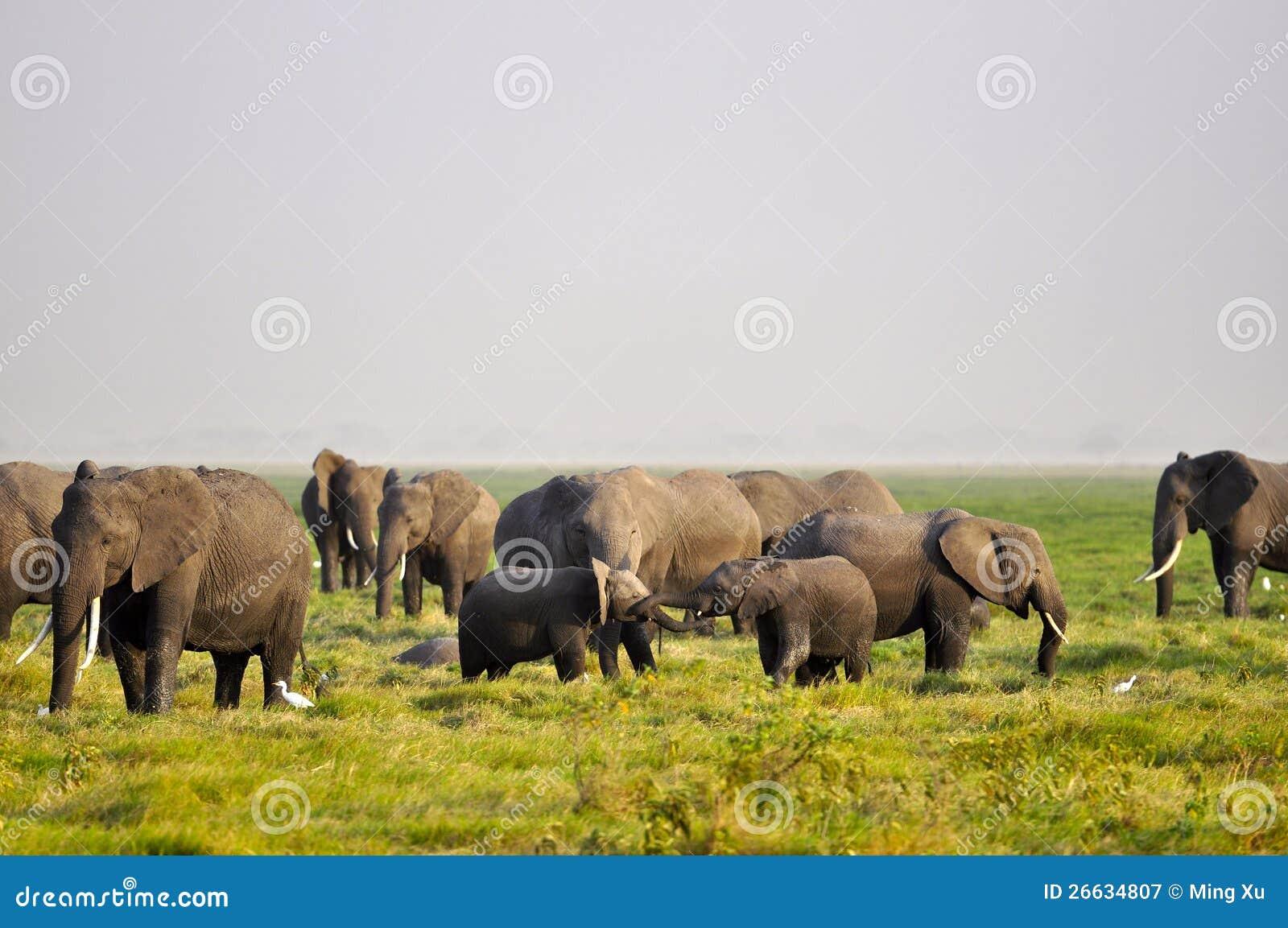Jogo dos elefantes do bebê