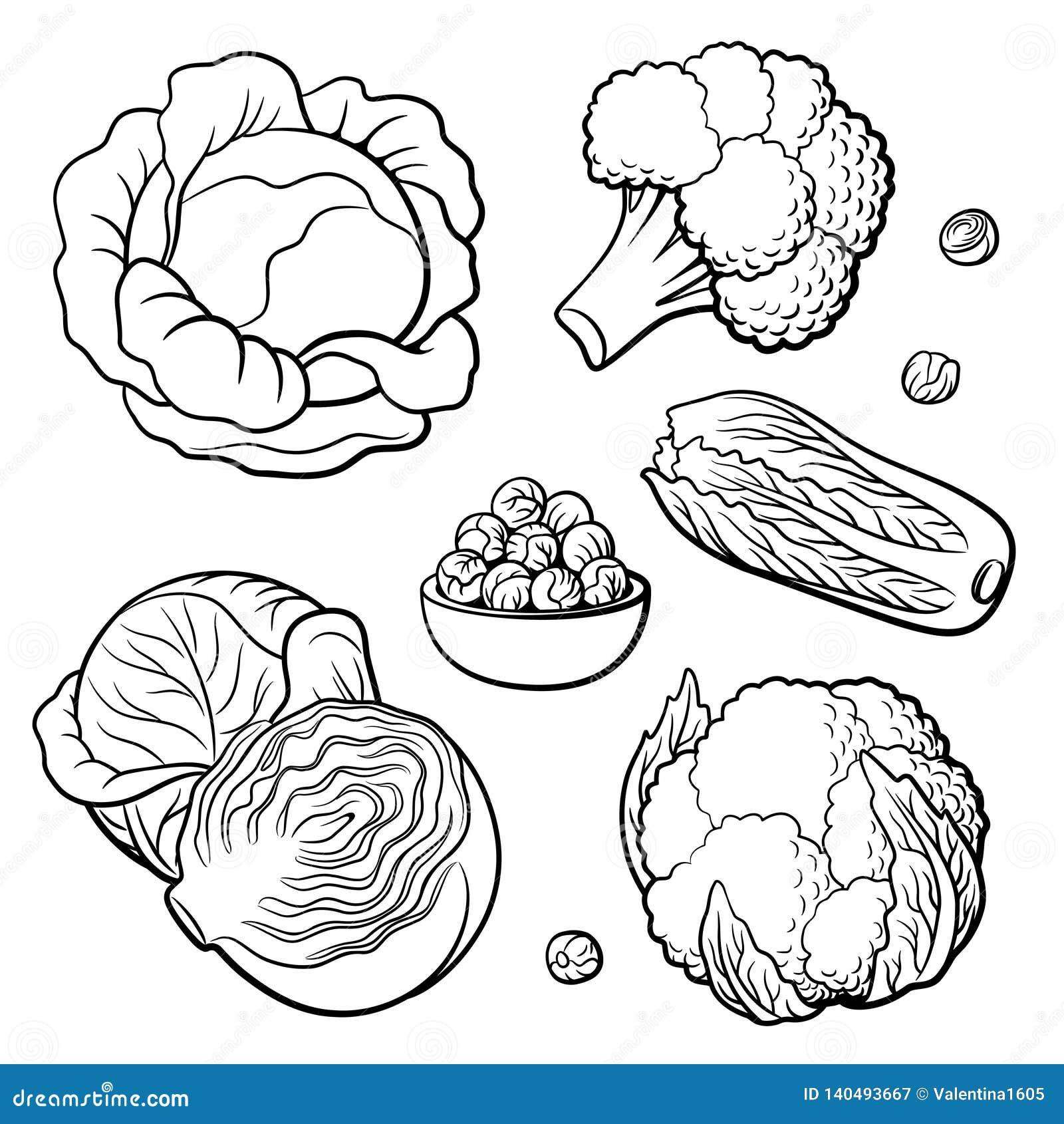 Jogo Dos Vegetais Couve, Brócolis, Couve-flor, Couve Chinesa E Couve-de-bruxelas  Ilustração do Vetor - Ilustração de jogo, flor: 140493667
