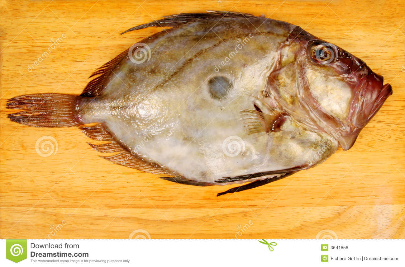 John dory royalty free stock image image 3641856 for Picture of dory fish
