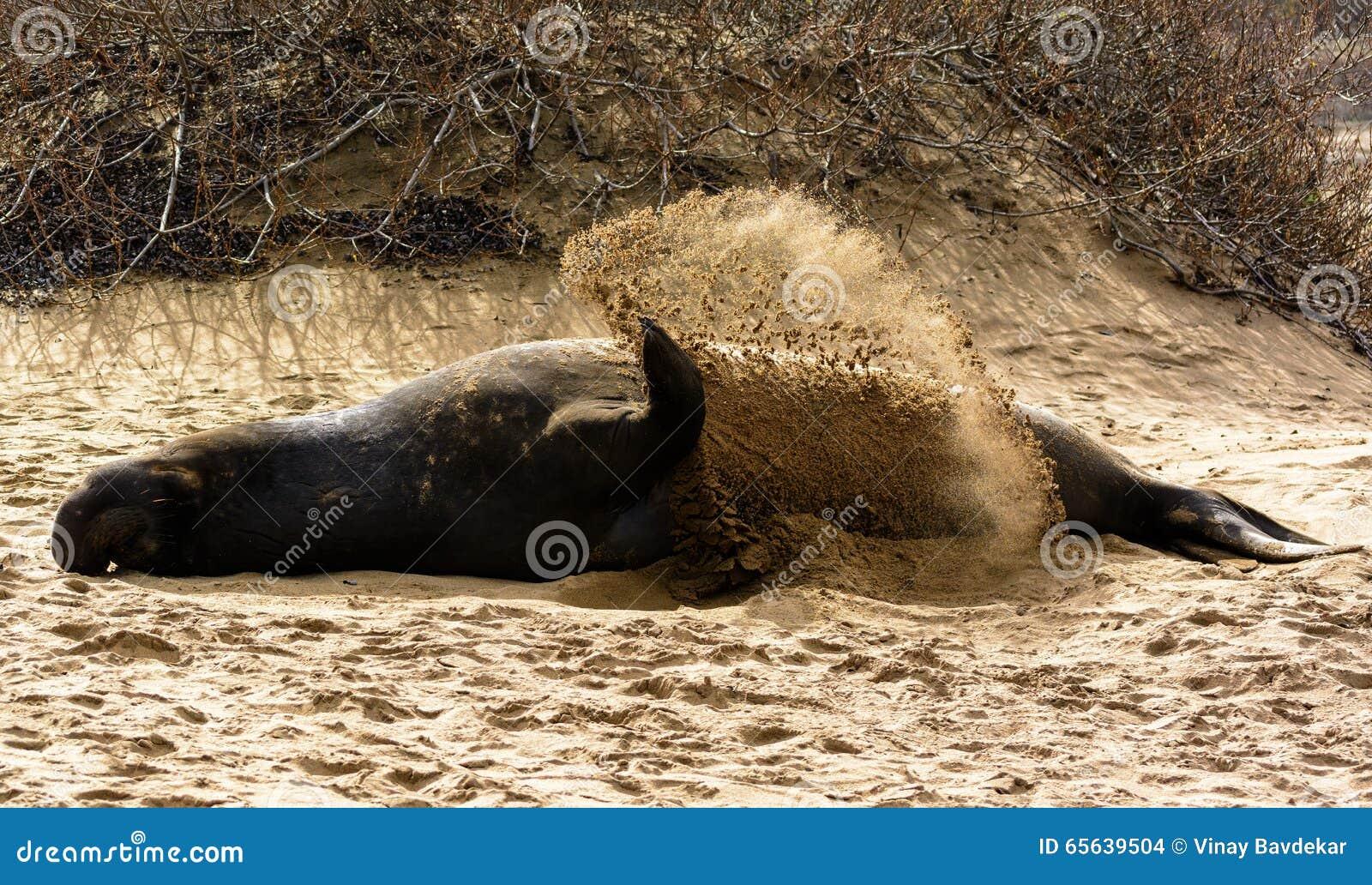 Joint d éléphant essayant de se refroidir