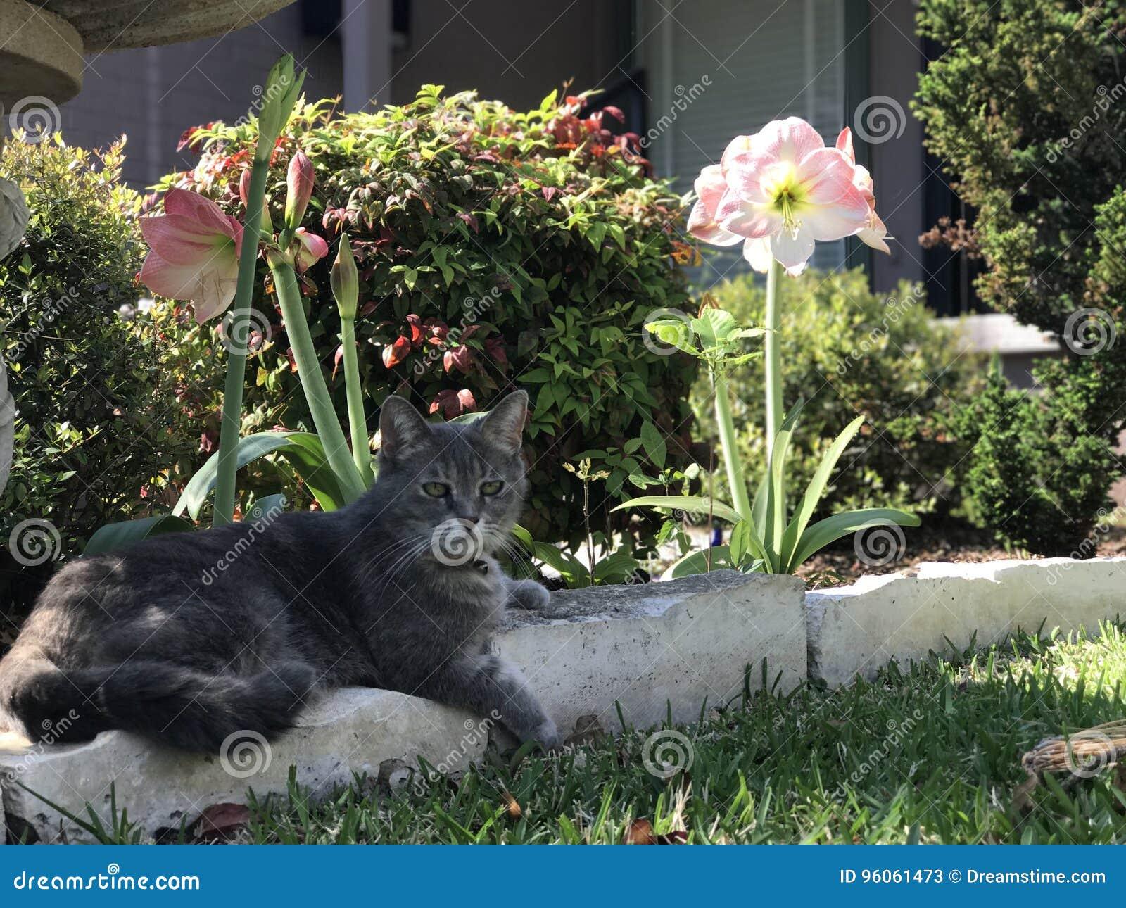 Joli Gray Cat