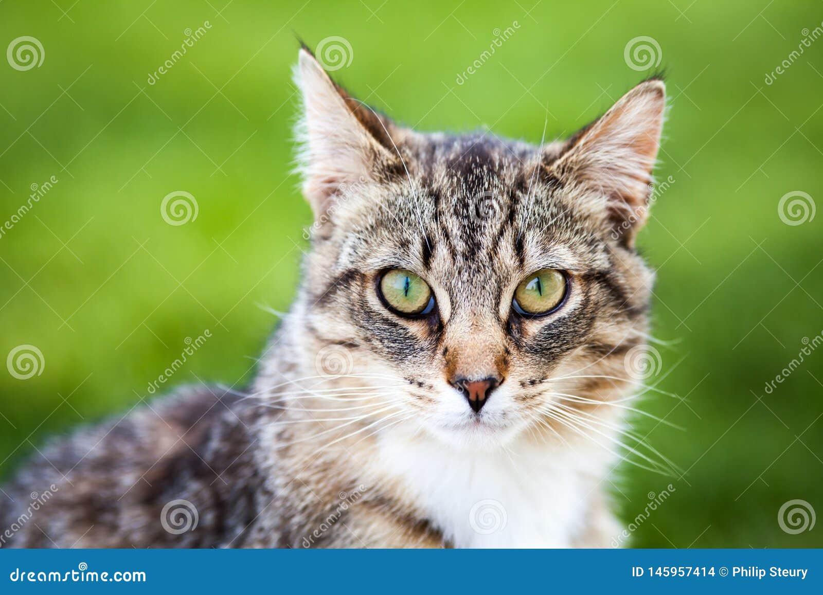 Joli Tiger Cat