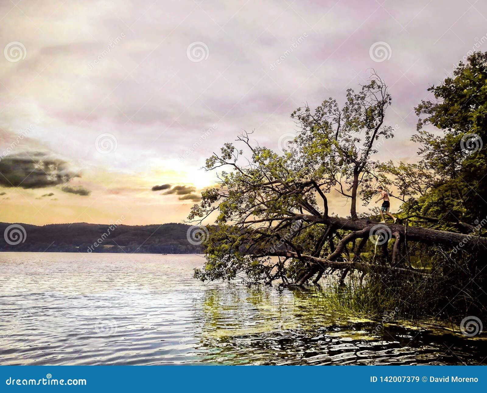 Jong geitje die zich op een gevallen boom bevinden die op het water springen