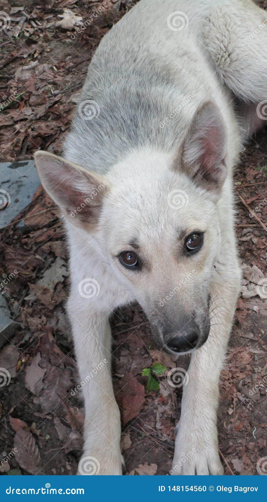 Jong puppy met expressieve ogen