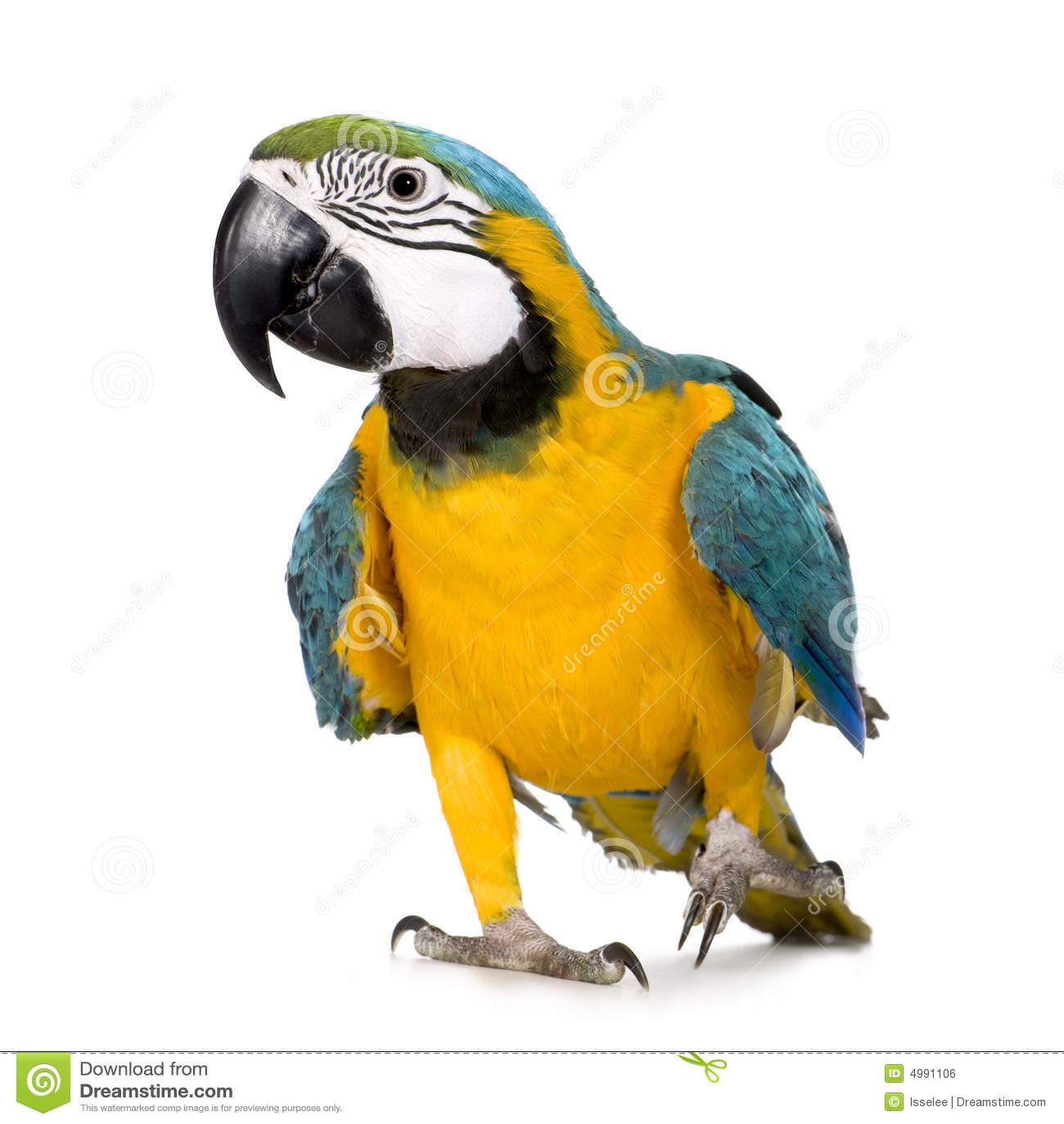Jonge blauw-en-Gele Ara