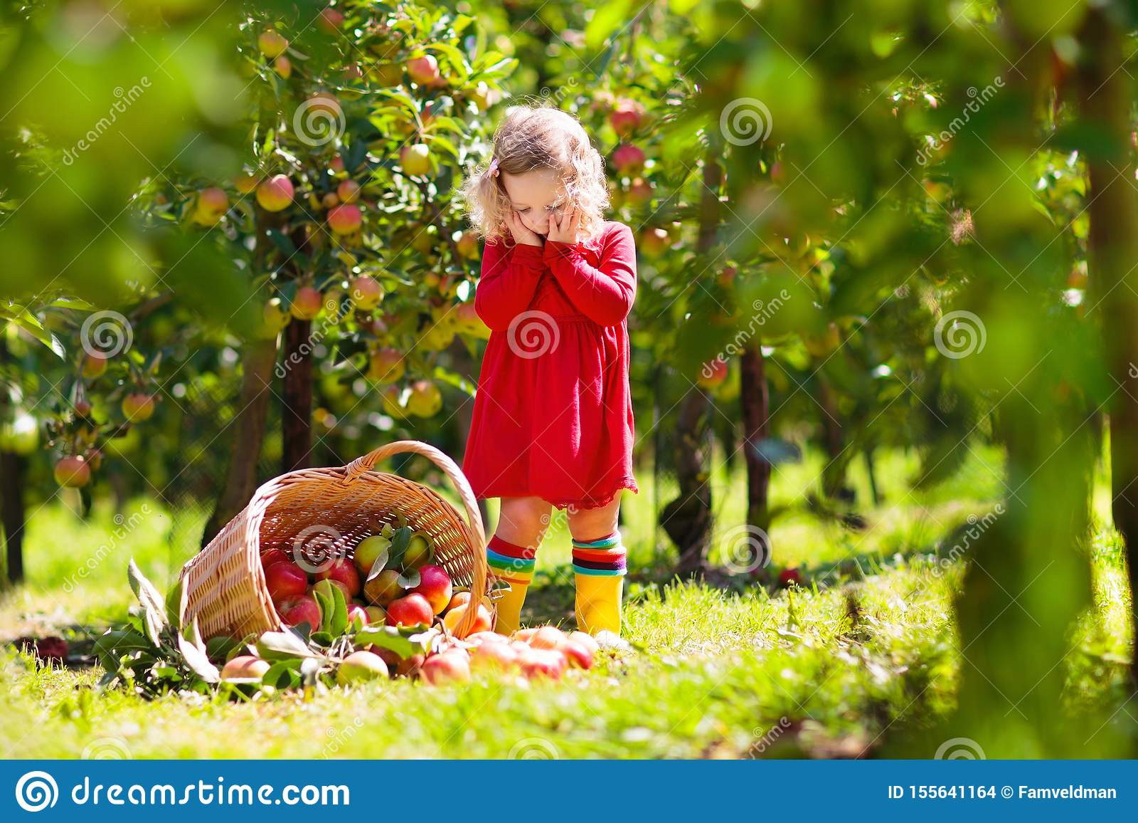 Jonge geitjes die appelen op landbouwbedrijf in de herfst plukken