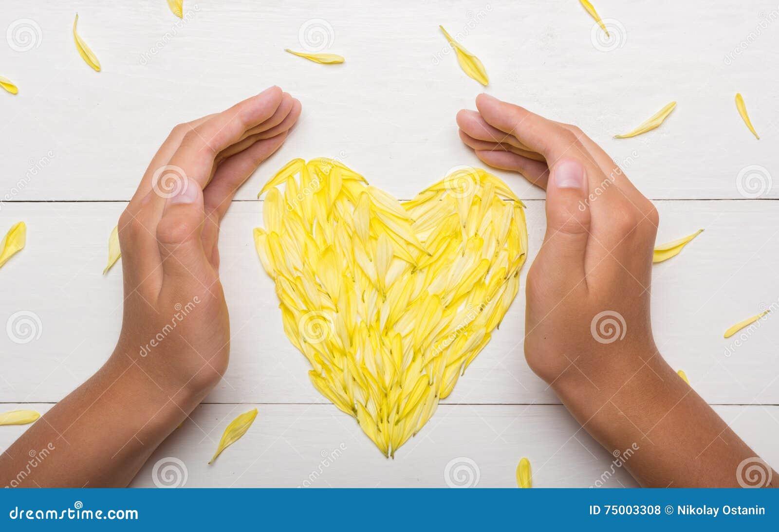 Jonge handen die hart houden die van chrysantenbloemblaadjes wordt gemaakt op lijst