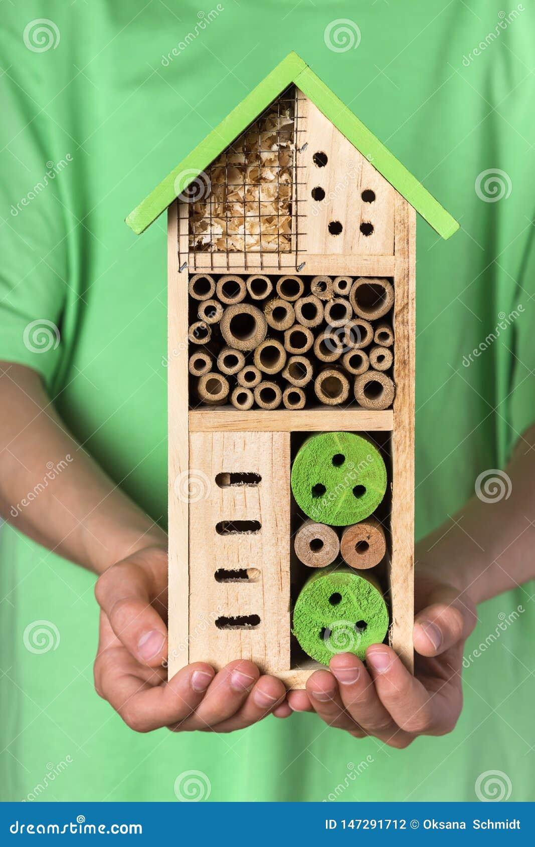 Jonge jongen die decoratieve houten bij voor verschillend kind van insecten houdt