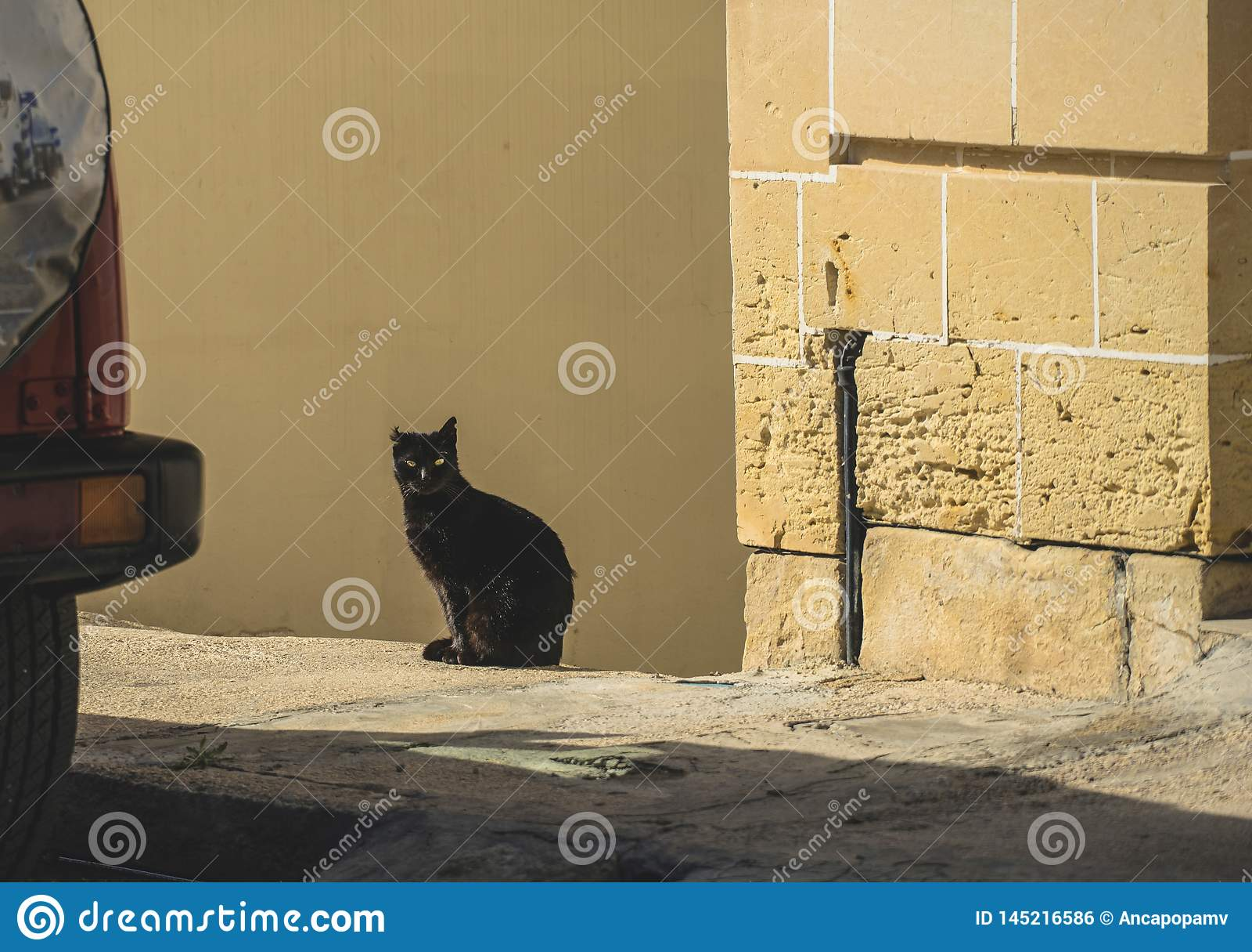 Jonge zwarte kattenzitting in de zon, die de camera, met één afgesneden jaar bekijkt