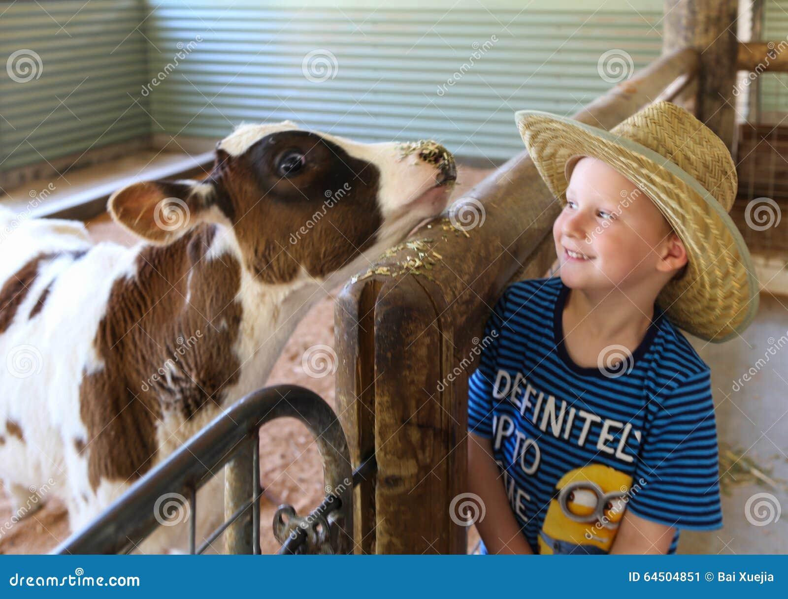 Jongens voedende koe in het landbouwbedrijf van het paradijsland aussie, gouden kust, Australië