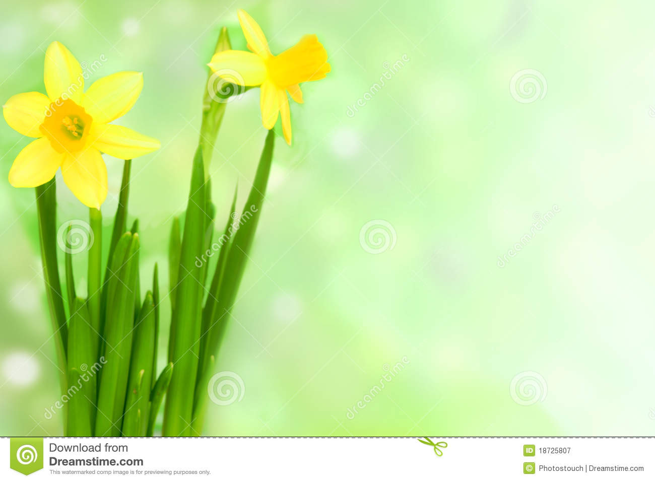 Jonquil Flower Royalty Free Stock graphy Image