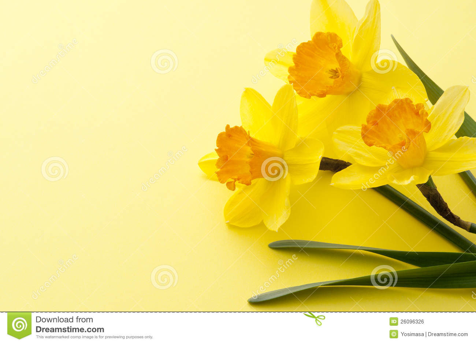 Jonquil Flower Royalty Free Stock Image Image
