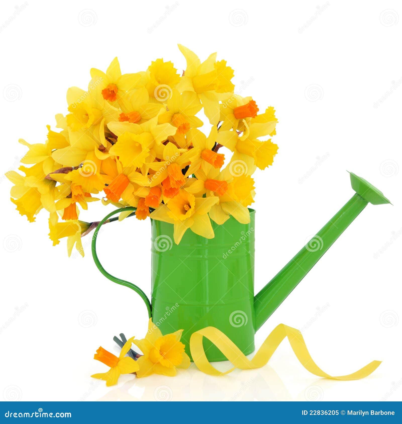 jonquille et narcisse image stock image du fleur fleurs 22836205. Black Bedroom Furniture Sets. Home Design Ideas