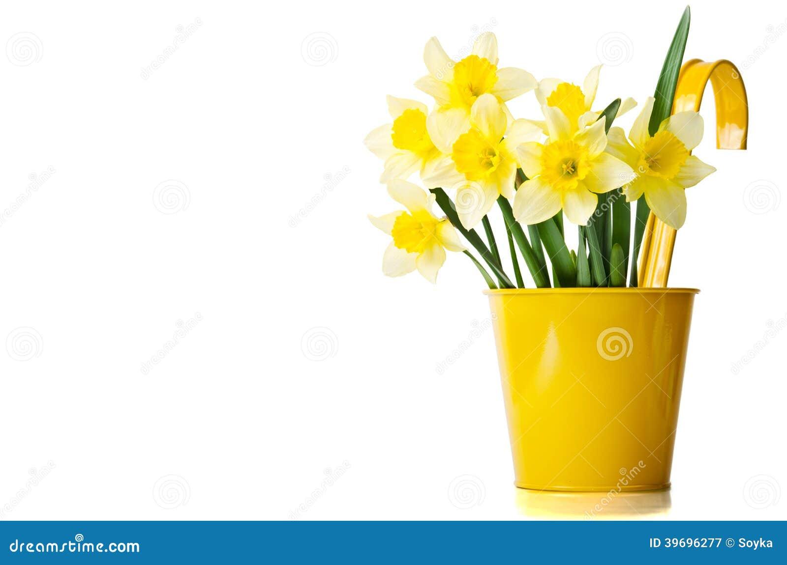jonquilles dans un pot de fleurs jaune photo stock image 39696277. Black Bedroom Furniture Sets. Home Design Ideas