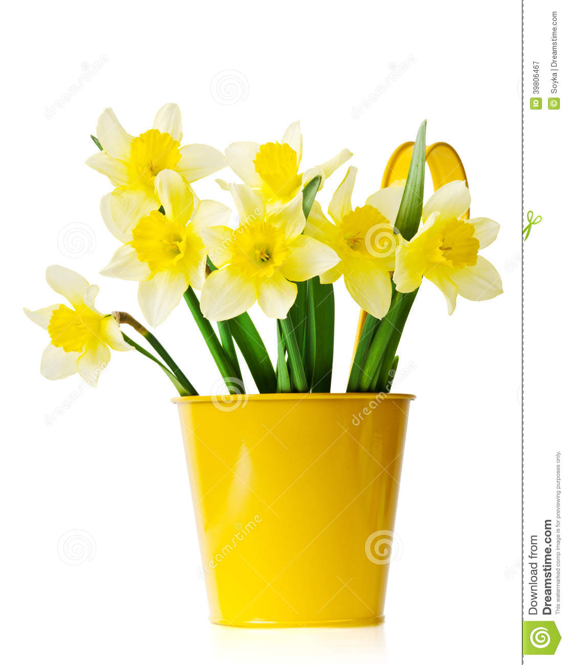 jonquilles dans un pot de fleurs jaune photo stock image 39806467. Black Bedroom Furniture Sets. Home Design Ideas
