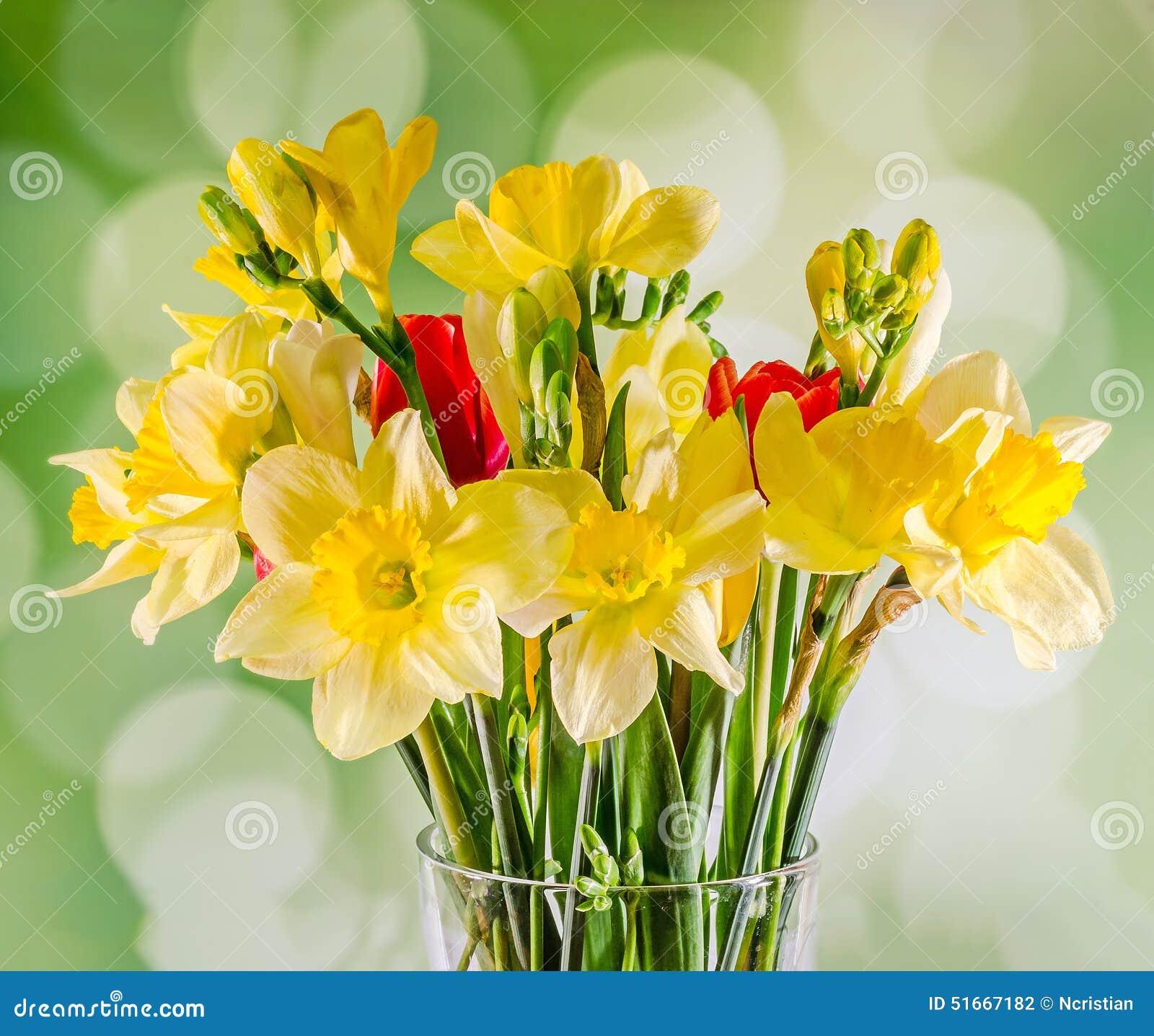 Jonquilles et fleurs jaunes de freesias, tulipes rouges dans un vase  transparent, fin,