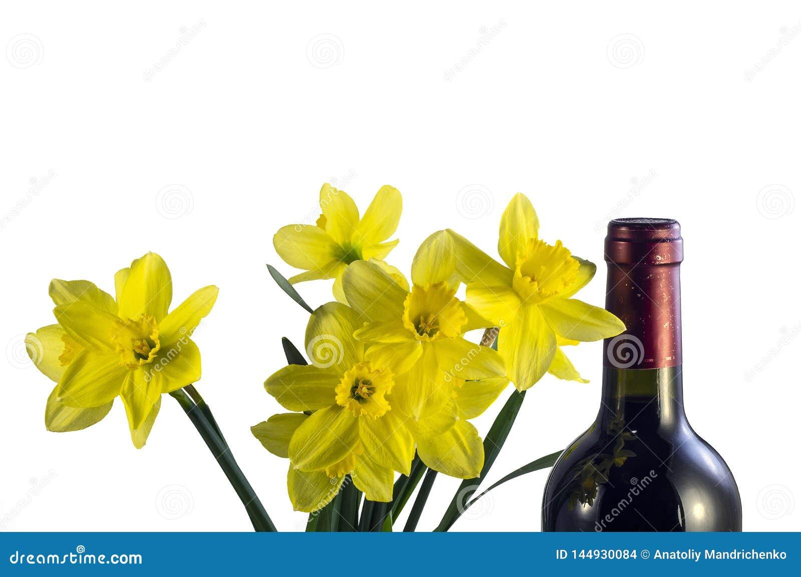 Jonquilles tôt de fleurs de ressort et une bouteille de vin de raisin rouge