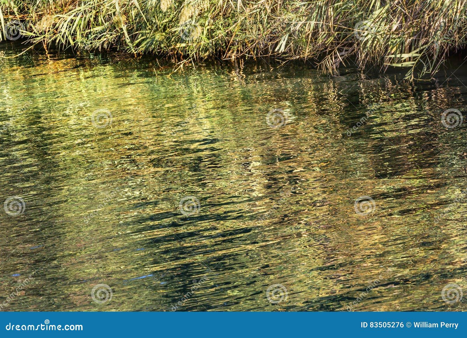 Jordan River Green Water Reflections-Zusammenfassung Israel