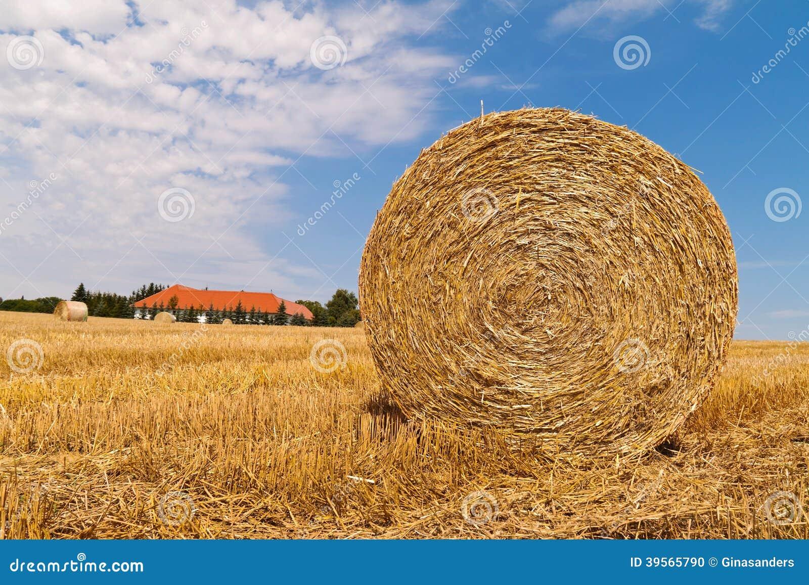 Jordbruk. fält med sugrörbaler