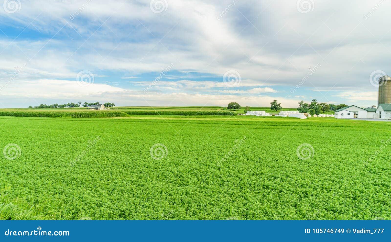 Jordbruk för fält för ladugård för Amish landslantgård i Lancaster, PA