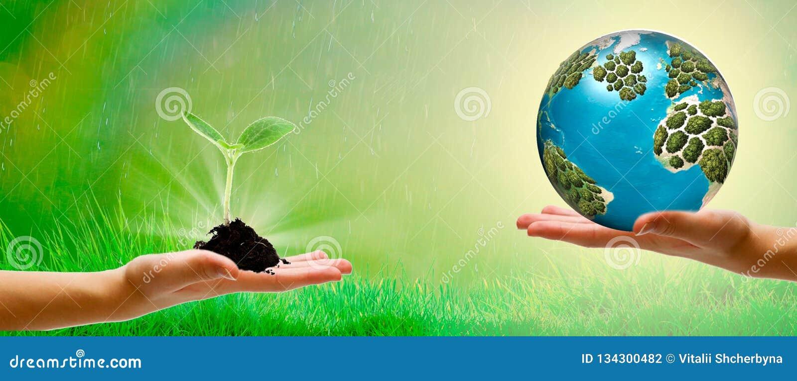 Jordbruk växande växter Växtplanta Handen som fostrar och bevattnar som är ung, behandla som ett barn växter som växer i groendef