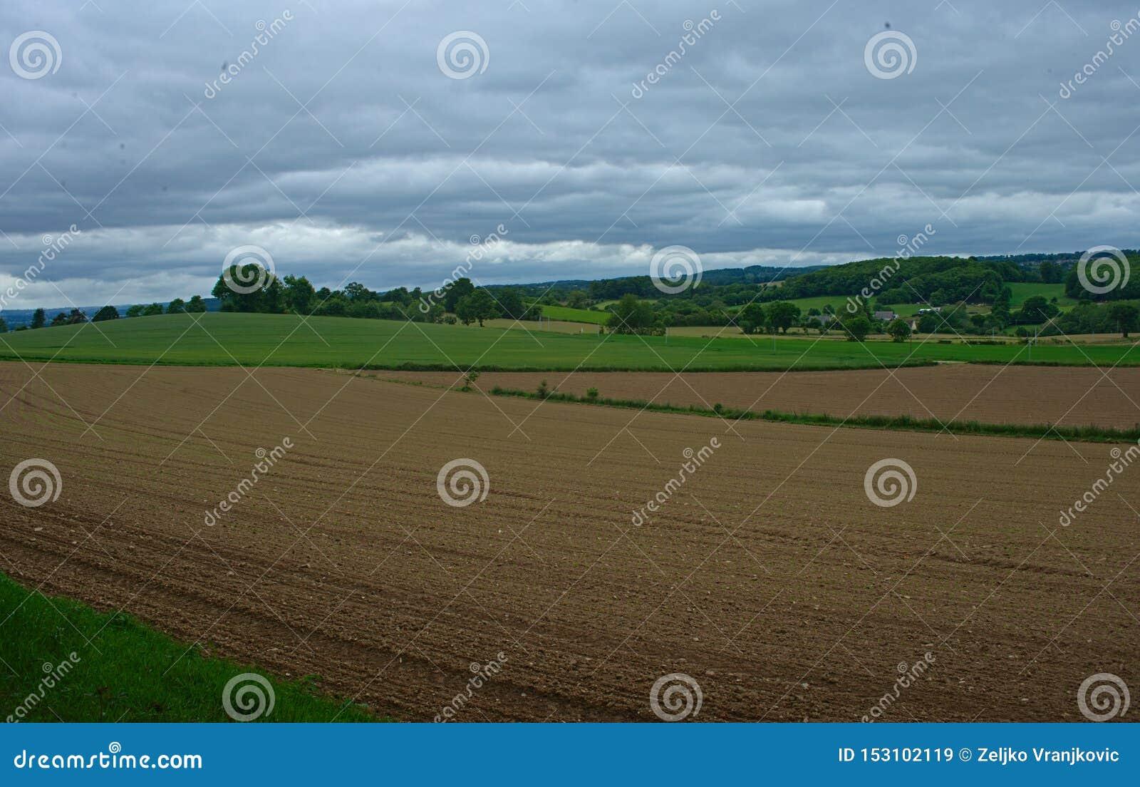 Jordbruks- fält med små havre som växer, och molnig himmel