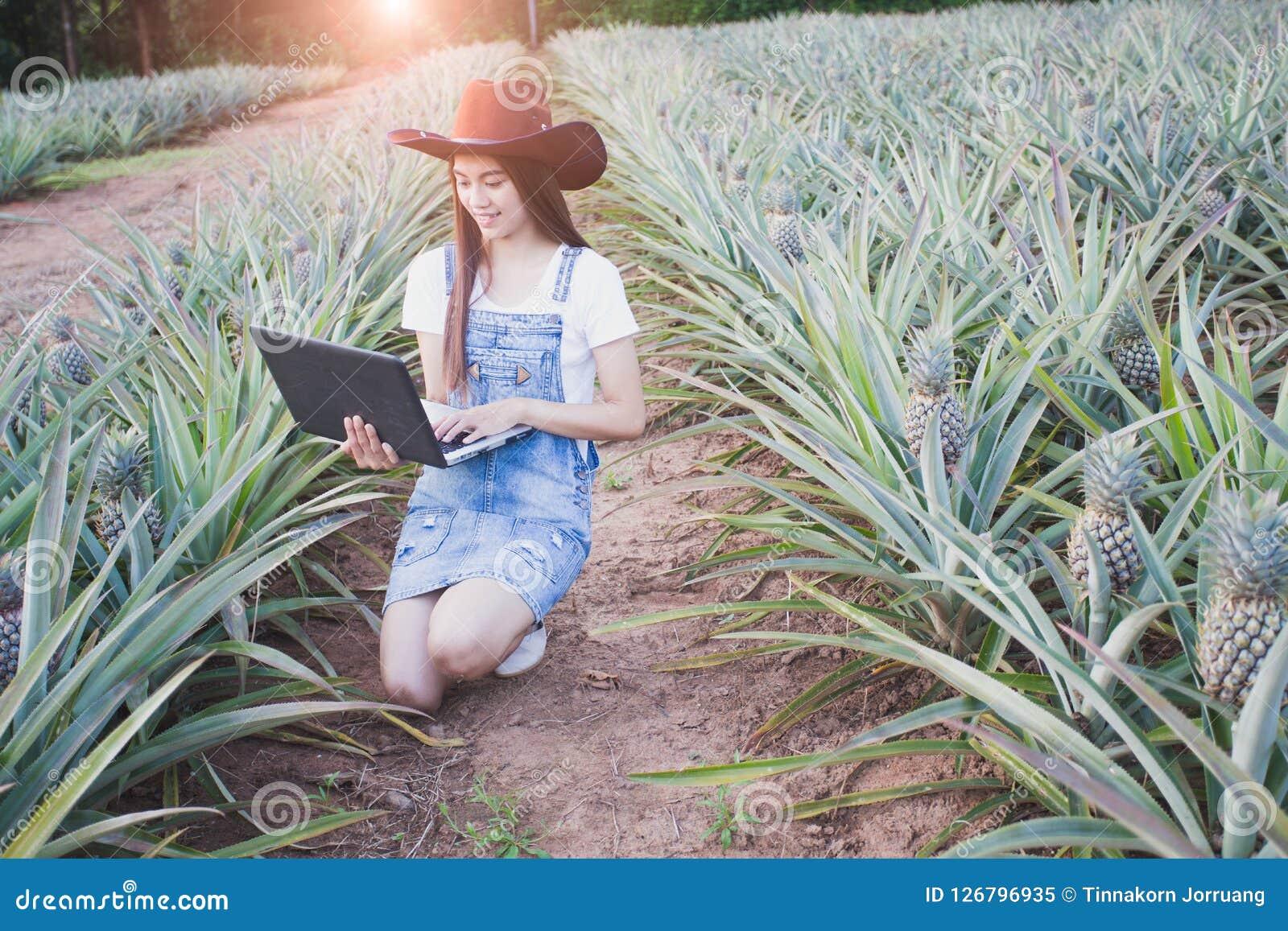 Jordbruks- forskare studerar tillväxten av ananas pl