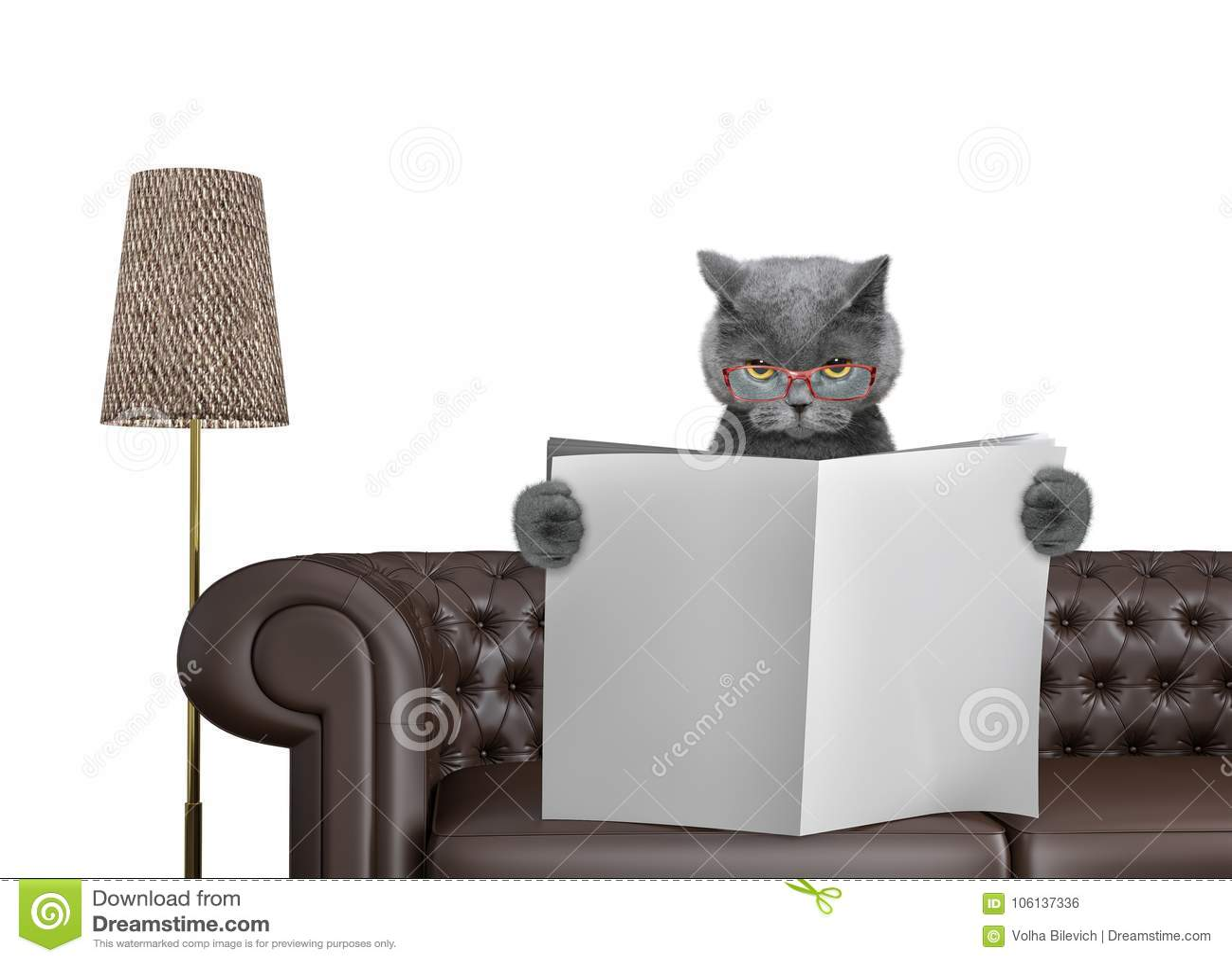 Jornal bonito da leitura do gato com espaço para o texto no sofá na sala de visitas Isolado no branco