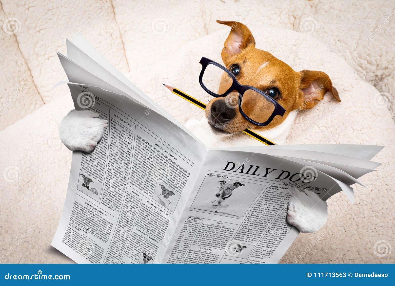Jornal da leitura do cão