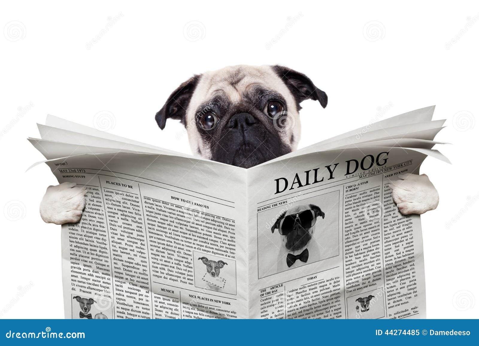 Jornal do cão