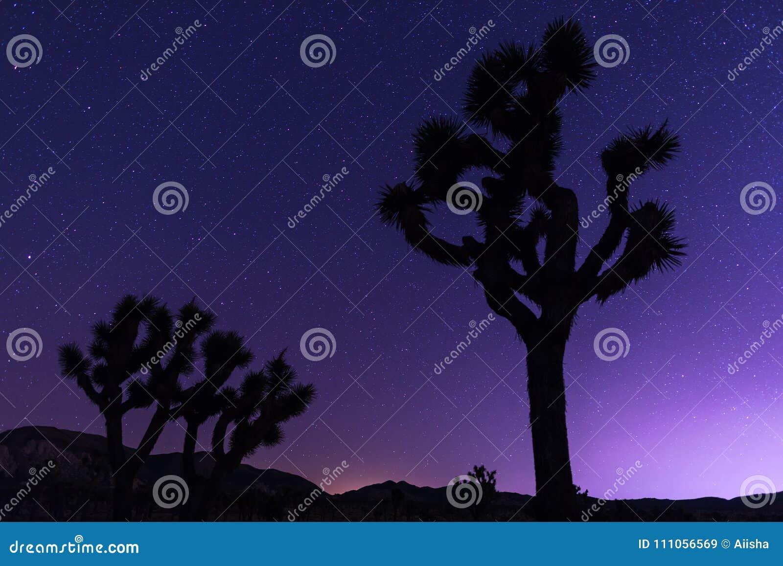 Joshua träd på natten
