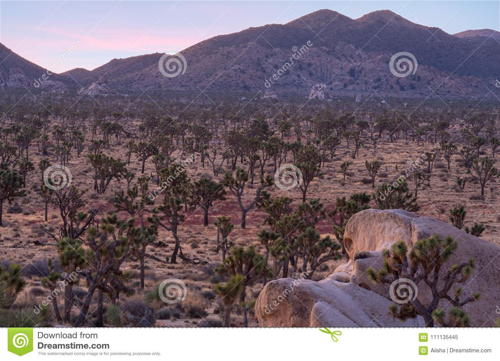 Joshua träd på underdel