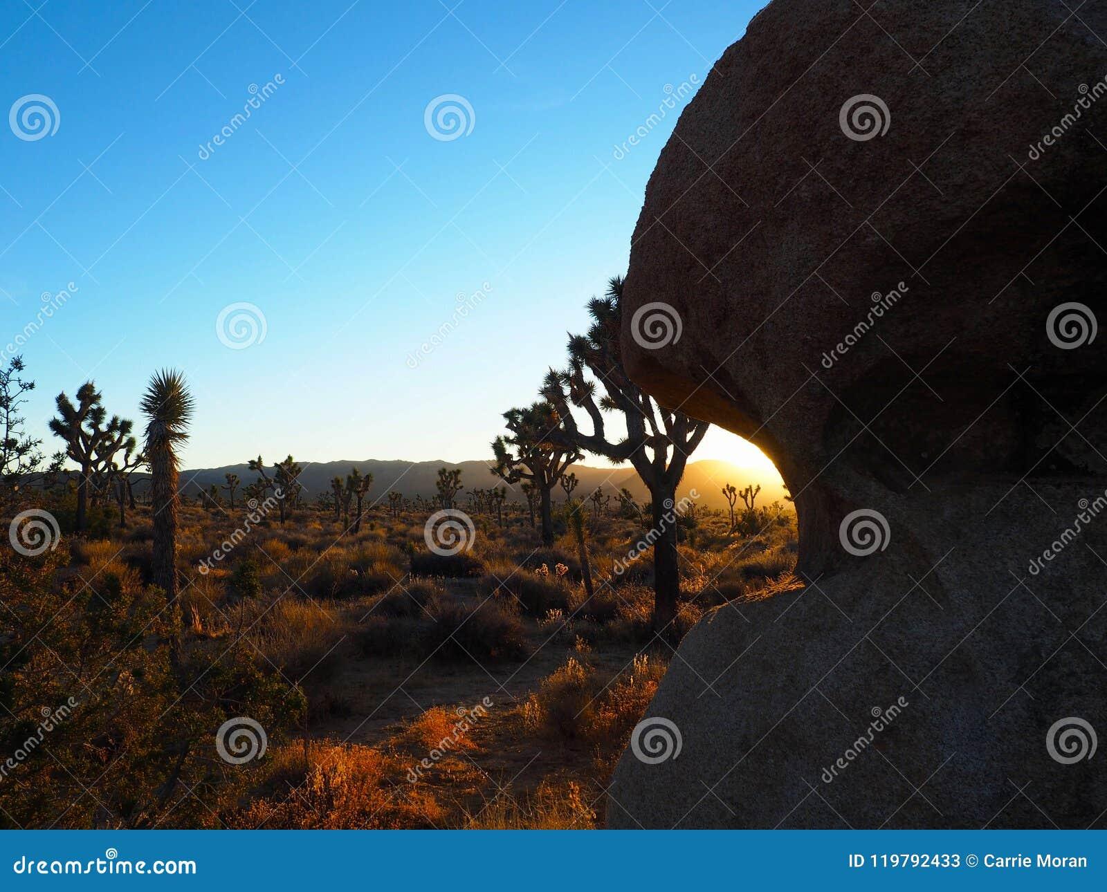 Joshua Tree California på solnedgången