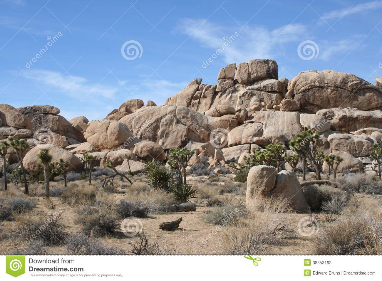 Outside Plants Joshua Tree National Park Desert Landscape Stock