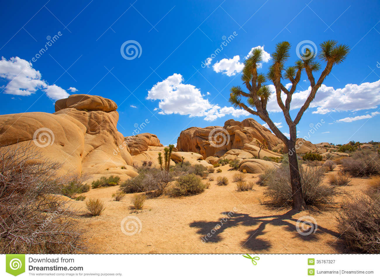 joshua tree national park women Joshua tree national park puzzle in great sightings jigsaw puzzles on thejigsawpuzzlescom play full screen, enjoy puzzle of the day and thousands more.