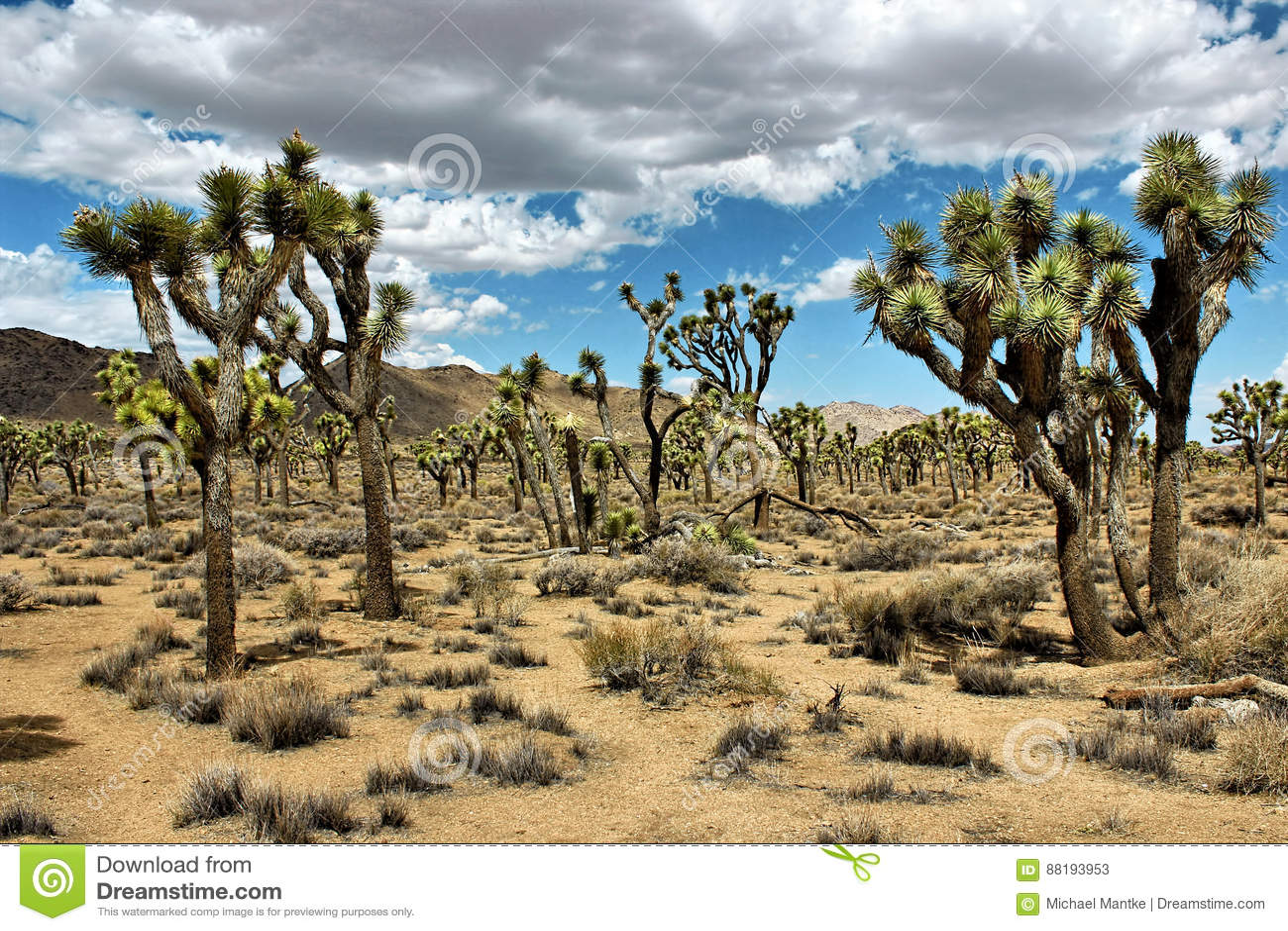 Joshua Tree National Park Mojave Desert California Usa Stock