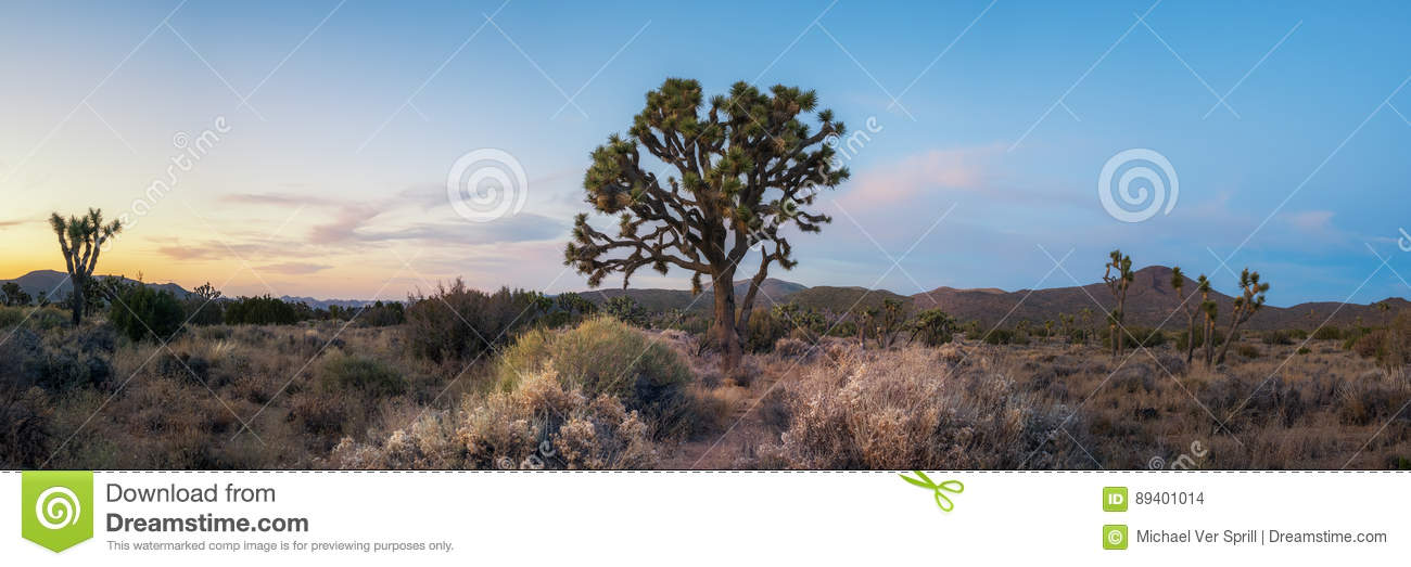 Joshua Tree National Park Panorama