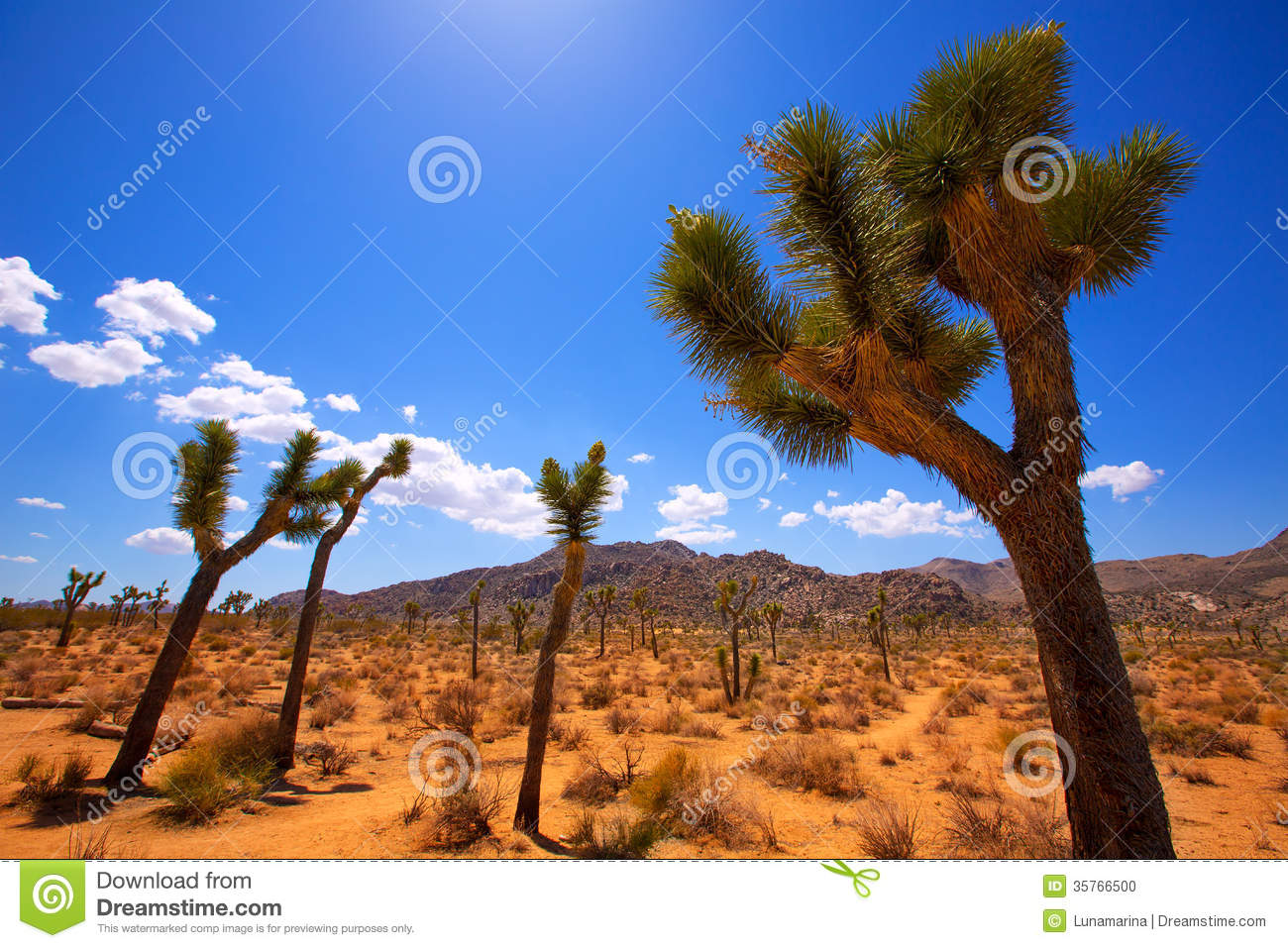 Joshua Tree National Park Yucca Valley Mohave Desert ...