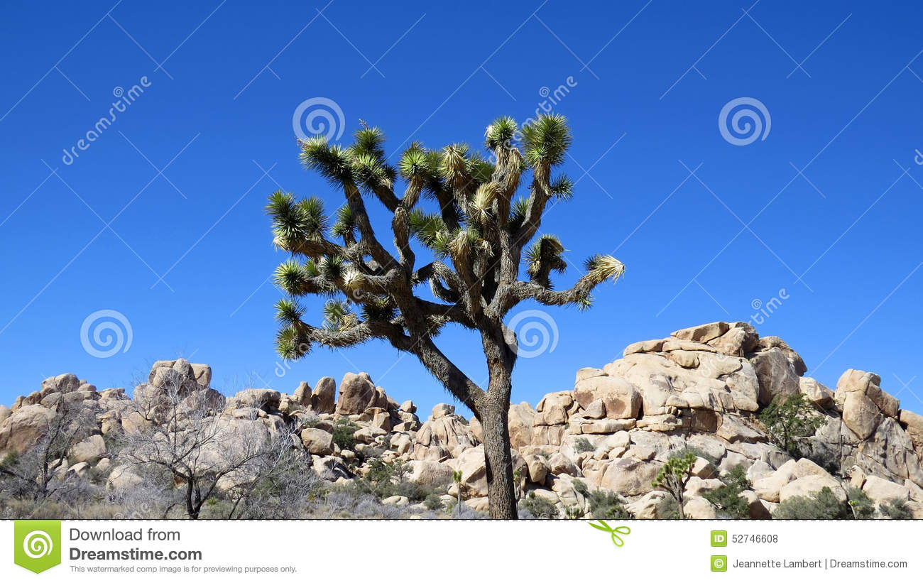 joshua tree single men Two bodies were recovered in joshua tree national park on sunday by teams  police shoot dead black man on city  hero 'i'm happiest being single i don.