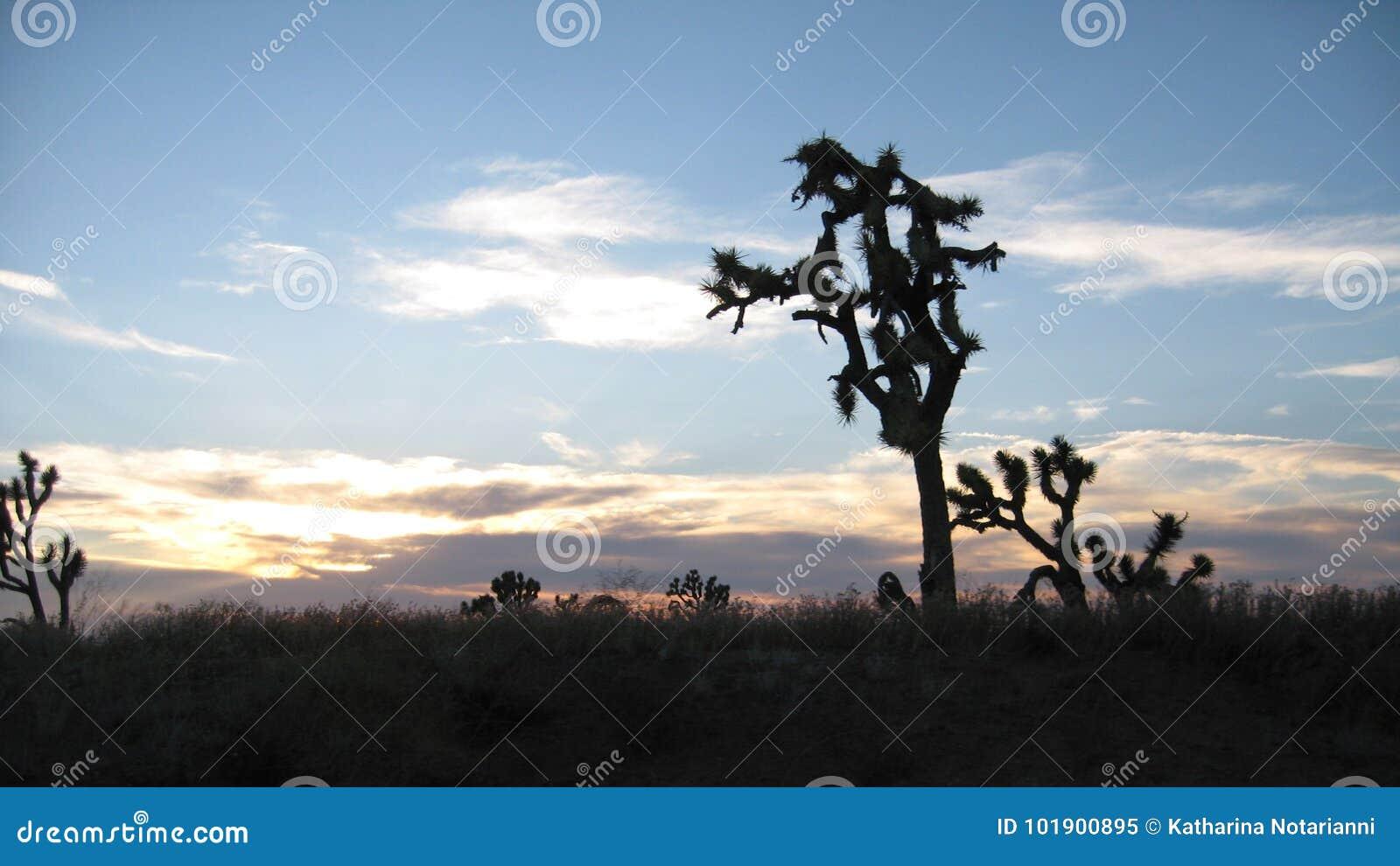 Joshua Trees at Grand Canyon West Rim in Northwestern Arizona