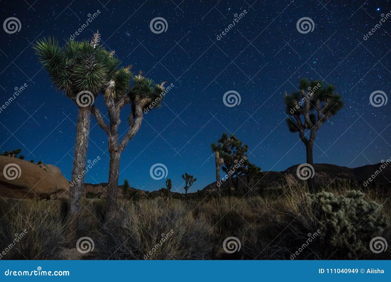Joshua Trees At Night Stock Image Image Of Park Moon