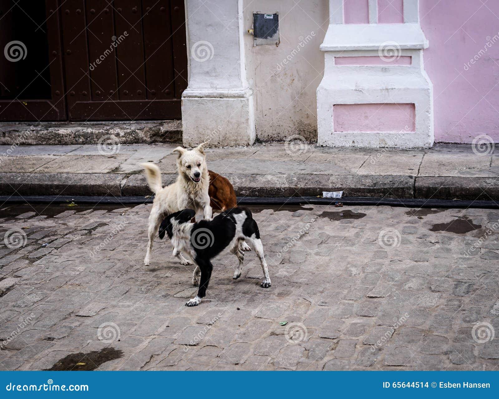 Jouer des chiens dans la rue