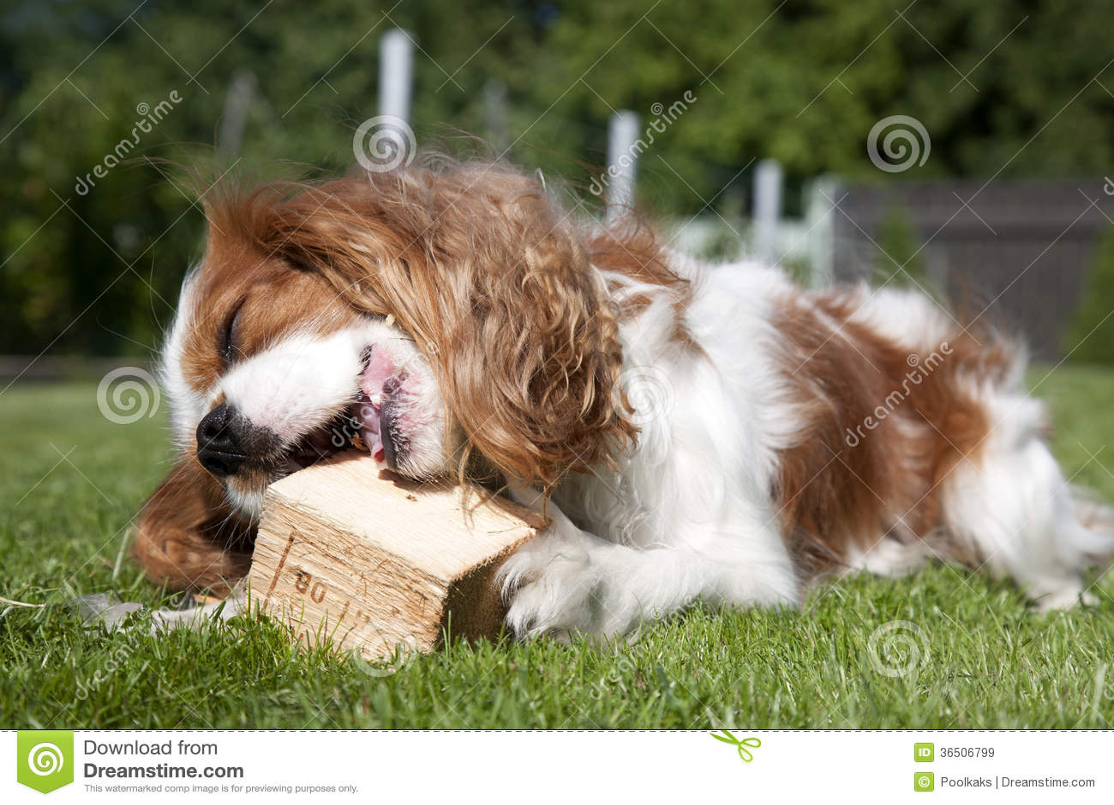 Jouer le chiot avec le morceau en bois