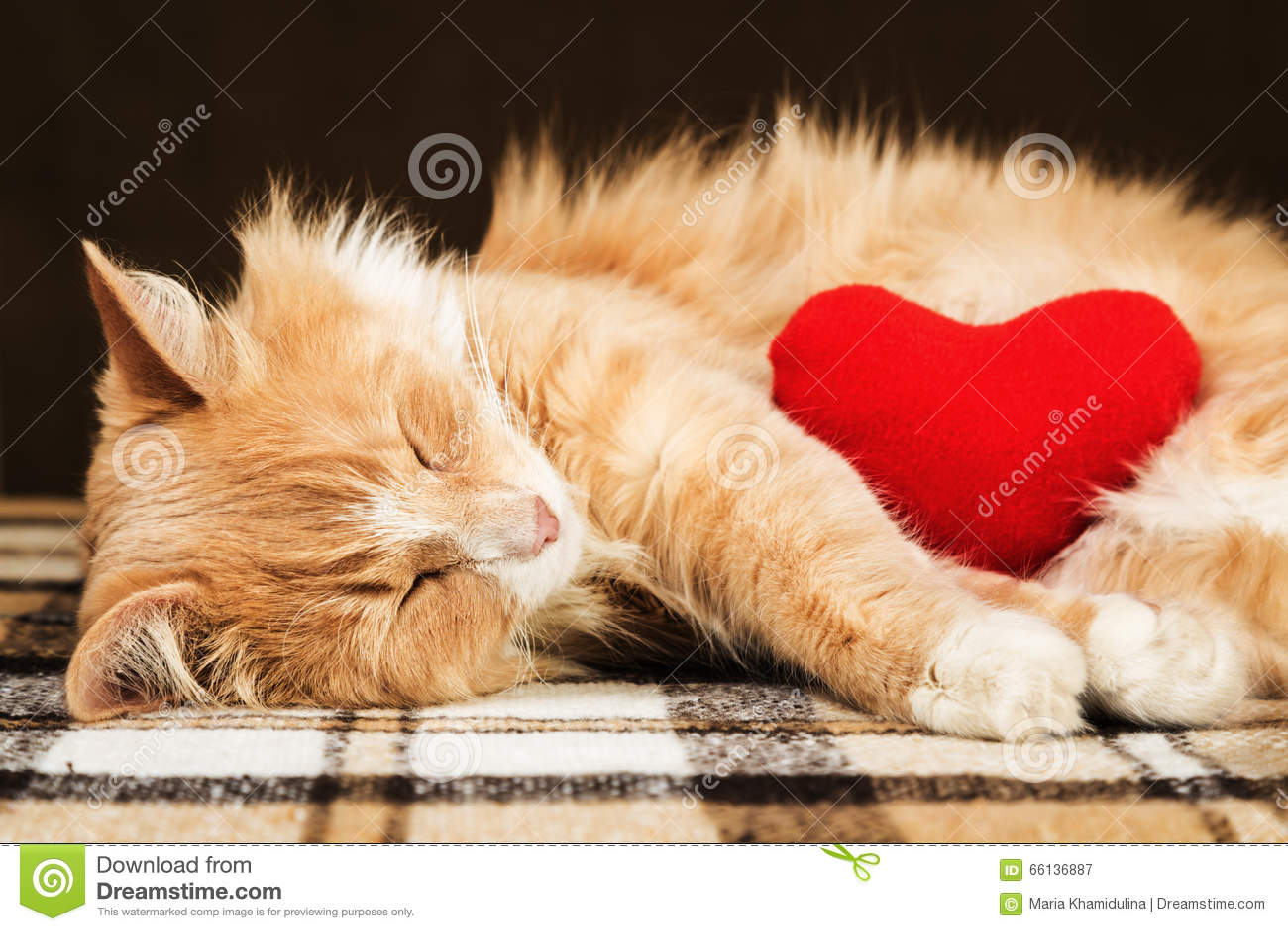 Jouet mou étreignant endormi de coeur de peluche de chat pelucheux mignon rouge