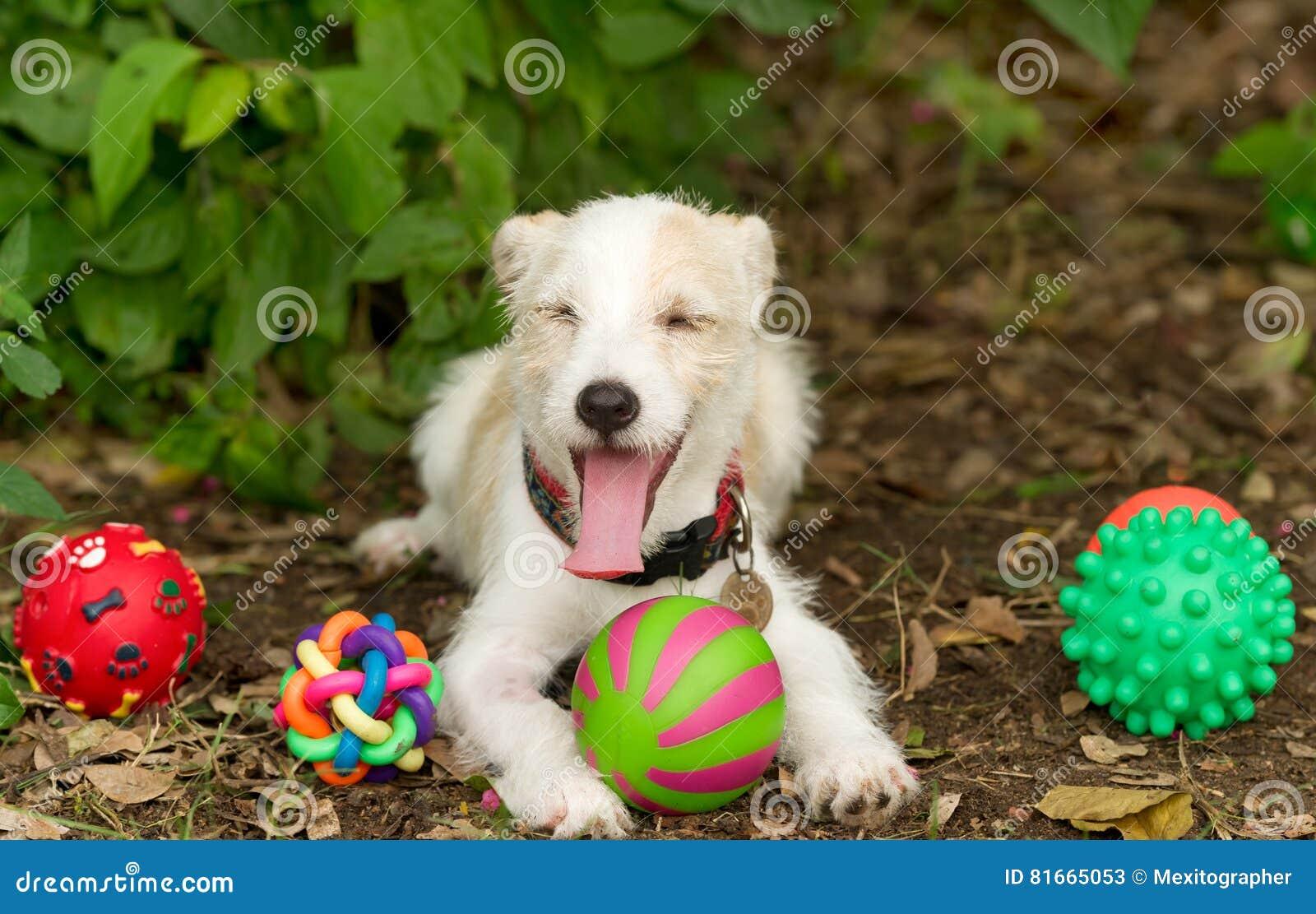 Jouets de chien