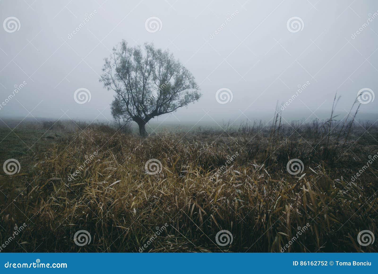 Jour brumeux d automne sombre foncé sur le champ avec l arbre isolé