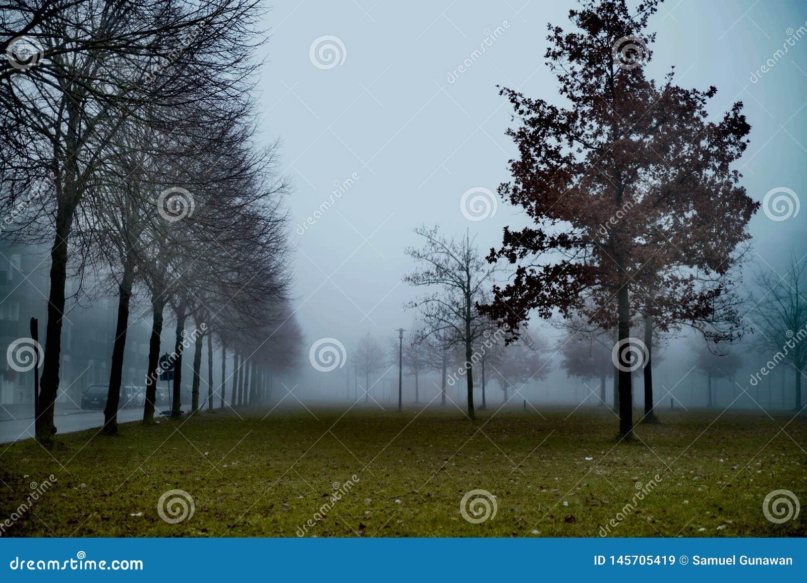 Jour brumeux pendant le matin