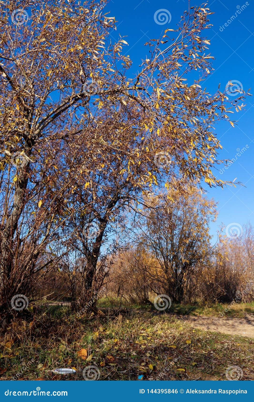 Jour d automne dans Arkhangelsk Vue de la rivière Dvina du nord et port fluvial dans Arkhangelsk